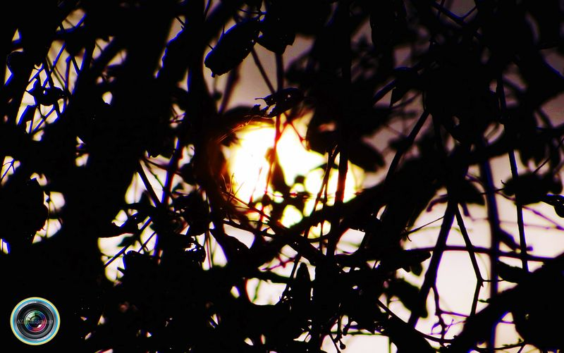 Sunlight Sun Sunrise Sun Behind The Tree Showcase April Nature Photography Nature Porn Hello World That's Me Check This Out Taking Photos EyeEm Masterclass EyeEm Best Shots My Perspective EyeEm Gallery India ASIA My Favorite Photo