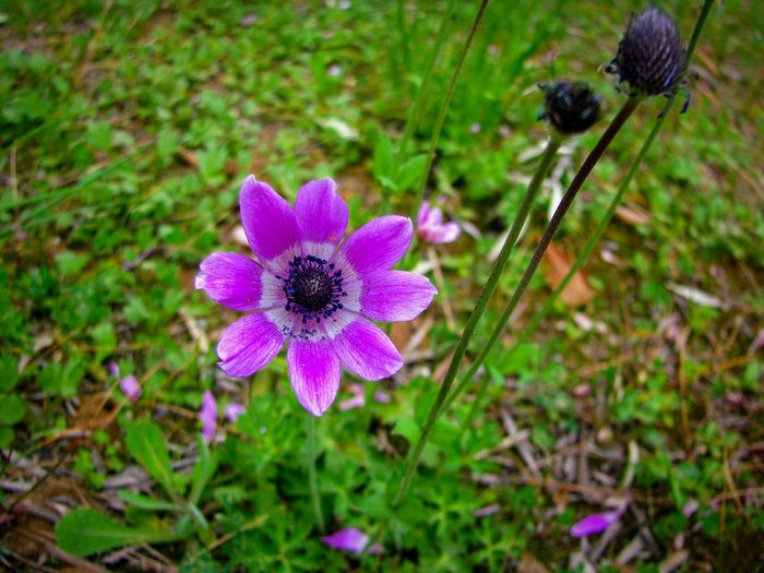 Flower Purple Nature Focus On Foreground Fragility Plant Petal Beauty In Nature Growth Flower Head Freshness Blooming Purple Flower Blossom Purple Blossoms Wild Flowers Flowers Break The Mold