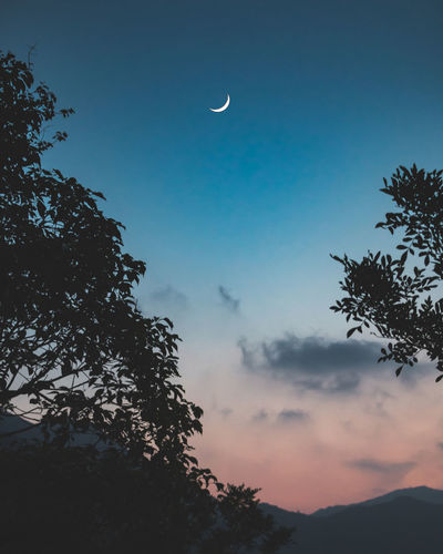Astronomy Beauty In Nature Cloud - Sky Crescent Dusk Growth Half Moon Low Angle View Moon Nature No People Outdoors Planetary Moon Plant Scenics - Nature Silhouette Sky Space Tranquil Scene Tranquility Tree