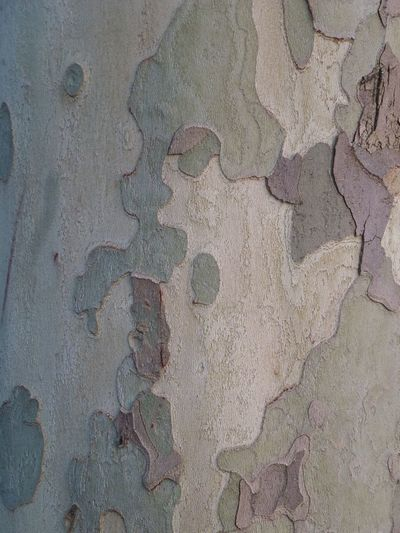 """Bark as art"" Bark Close-up Detail France Full Frame Jardin Luxembourg Nature No People Outdoors Paris Tree"