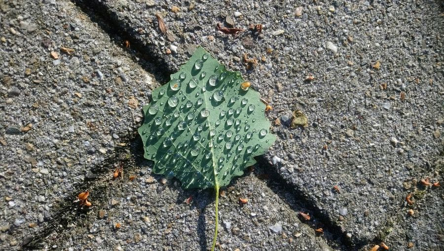 Rain Rain Drops Art Sunlight Leaf High Angle View Plant Green Color Close-up Paved Paving Stone Pavement Focus On Shadow Fallen Young Plant Walkway