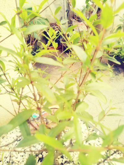 Things That Are Green Bonsai Hunters Bonsai Roma
