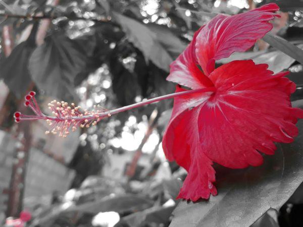 Happy Day!!! Flower Head 😊😊😊 Smile