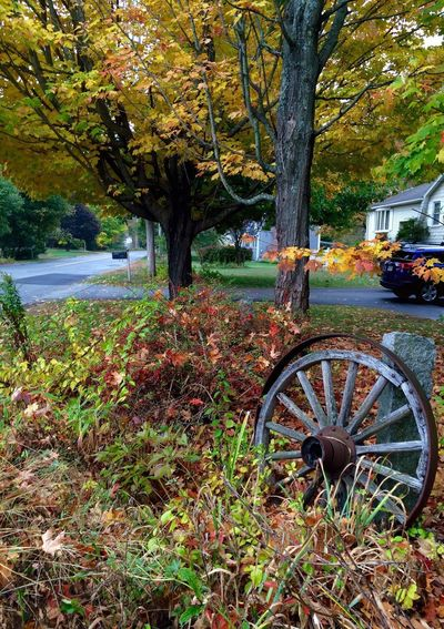 Autumn EyeEmNewHere New England  Autumn colors Autumn Tree Wagon Wheel Outdoors Transportation No People Nature Day Beauty In Nature