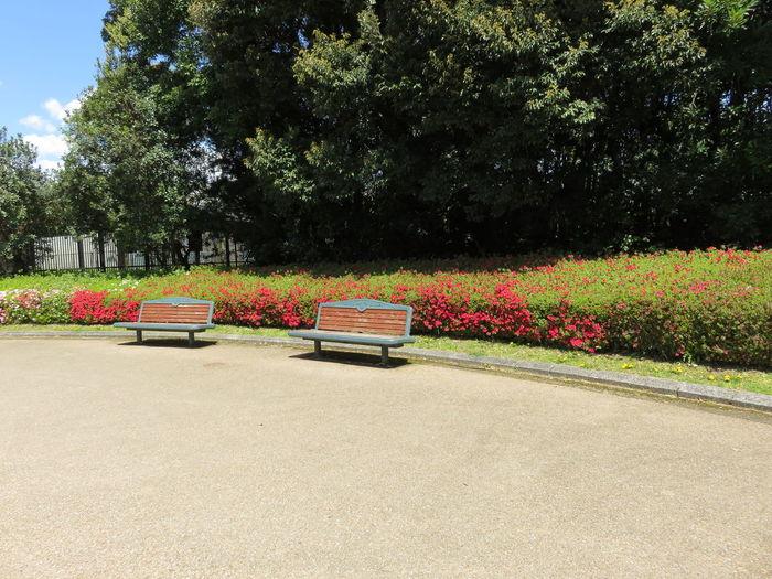 Park Chair 植物