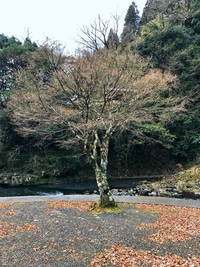 down below the waterfall Kusu, Japan Cloudy Morning Tree Rock - Object Nature Autumn No People Outdoors Day Sky Water Scenics Landscape Plant Beauty In Nature Bare Tree