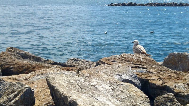 Bird Birds Sea Seagull Sea And Sky Seaside Loneliness Lonely Animal Animals Waves Rocks Rocks And Water Nature Nopeople Water Pet Portraits