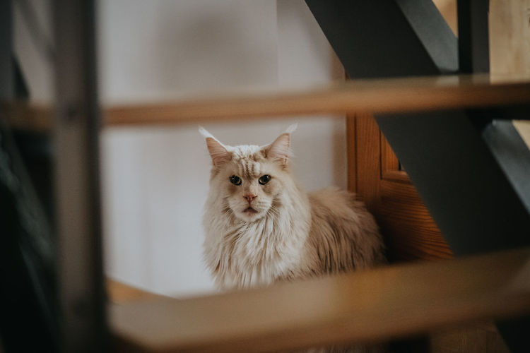 Portrait of cat sitting on chair at home