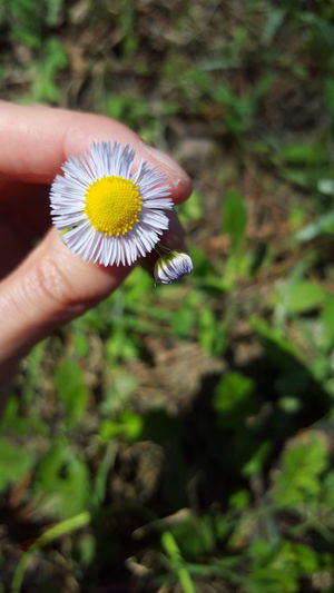 Flower Head Hand And Flower Wildflowers Springtime Flower Flower Collection Flowers, Nature And Beauty Hello Spring Purple Flower
