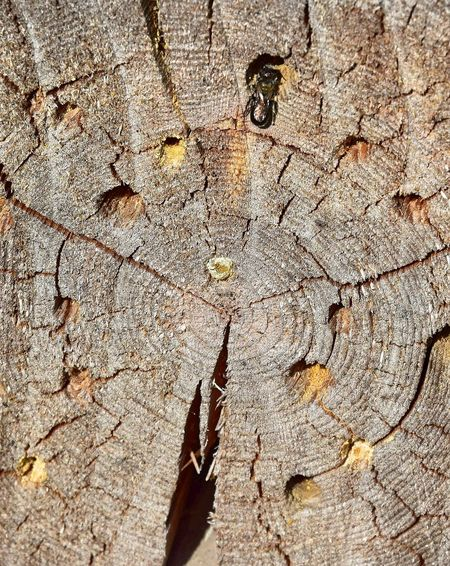 Backgrounds Brown Close-up Concentric Cracked Day Full Frame Insect Insect Photography Insects Collection Nature Nature Photography Nature_collection Naturelovers No People Outdoors Rough Textured  Tree Tree Ring Tree Stump Tree Trunk Wood - Material Wood Grain