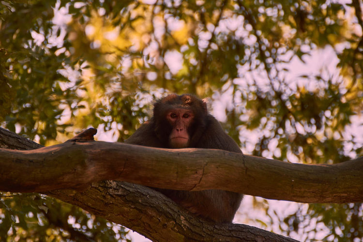 Low angle view of monkey sitting on tree branch in forest