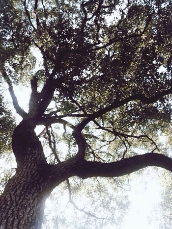 Hugging A Tree Enjoying Life