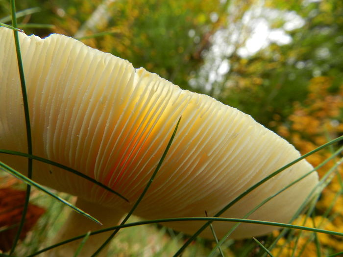 Mushroom Filter Beauty In Nature Close-up Day Grass Green Color Growth Looking Up Mushroom Fins Mushrooms Nature No People Outdoors Plant