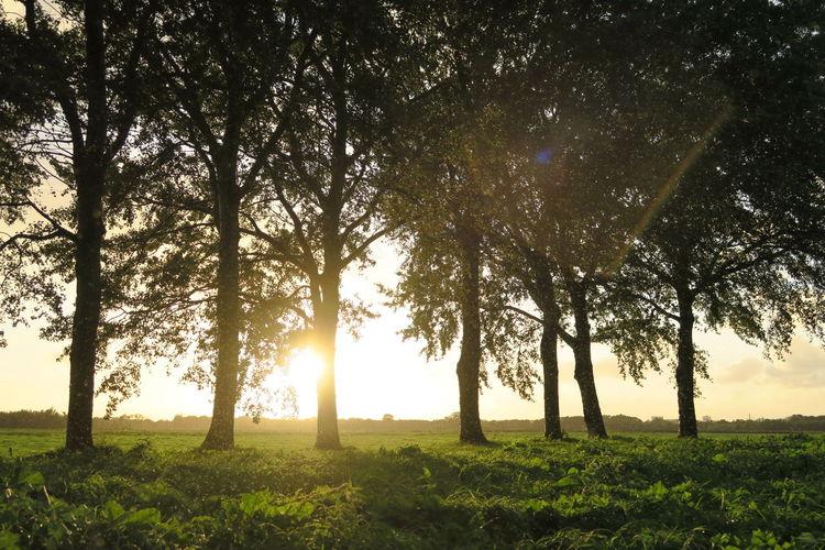 Grass Shine Sun And Rain Sunlight Trees