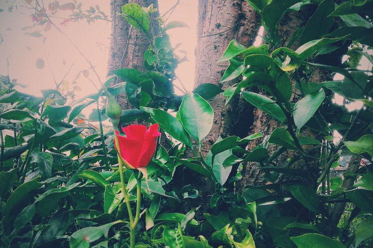 Nature Photography Paraiso☀🍃 Guatemala Belleza Natural Bellezanatural First Eyeem Photo Pqseo Fotografia Flores Rosas🌹🌹