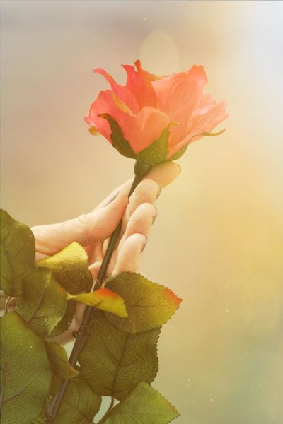 Rosé Red Rose Holding A Rose Hand Holding A Rose Hand Holding Flower Flower Nature Nature_collection Nature Photography Romantic Bokeh Hand