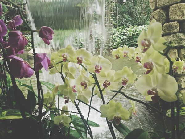 Flower Nature Beauty In Nature No People Water Blossom Flower Spring Blossom Indoor Garden Pool Indoor Flowers Indoor Garden Fragility Orchid Orchidea Waterfall Multi Color Orchid Growth Tranquil Scene Indoor Plants Indoor Gardening