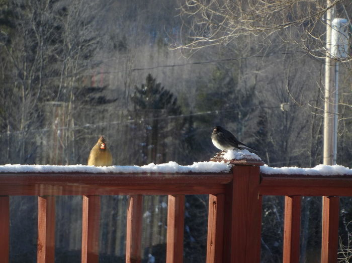 A couple of visitors looking for a snack. 🤗 EyeEm Selects Bird Animal Themes Animals In The Wild Animal Wildlife Perching Outdoors Winter Cold Temperature Nature Snowing No People