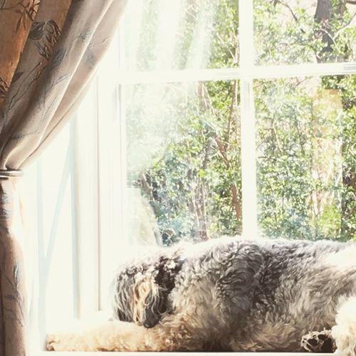 Beautifuldog Happydog Sunshine