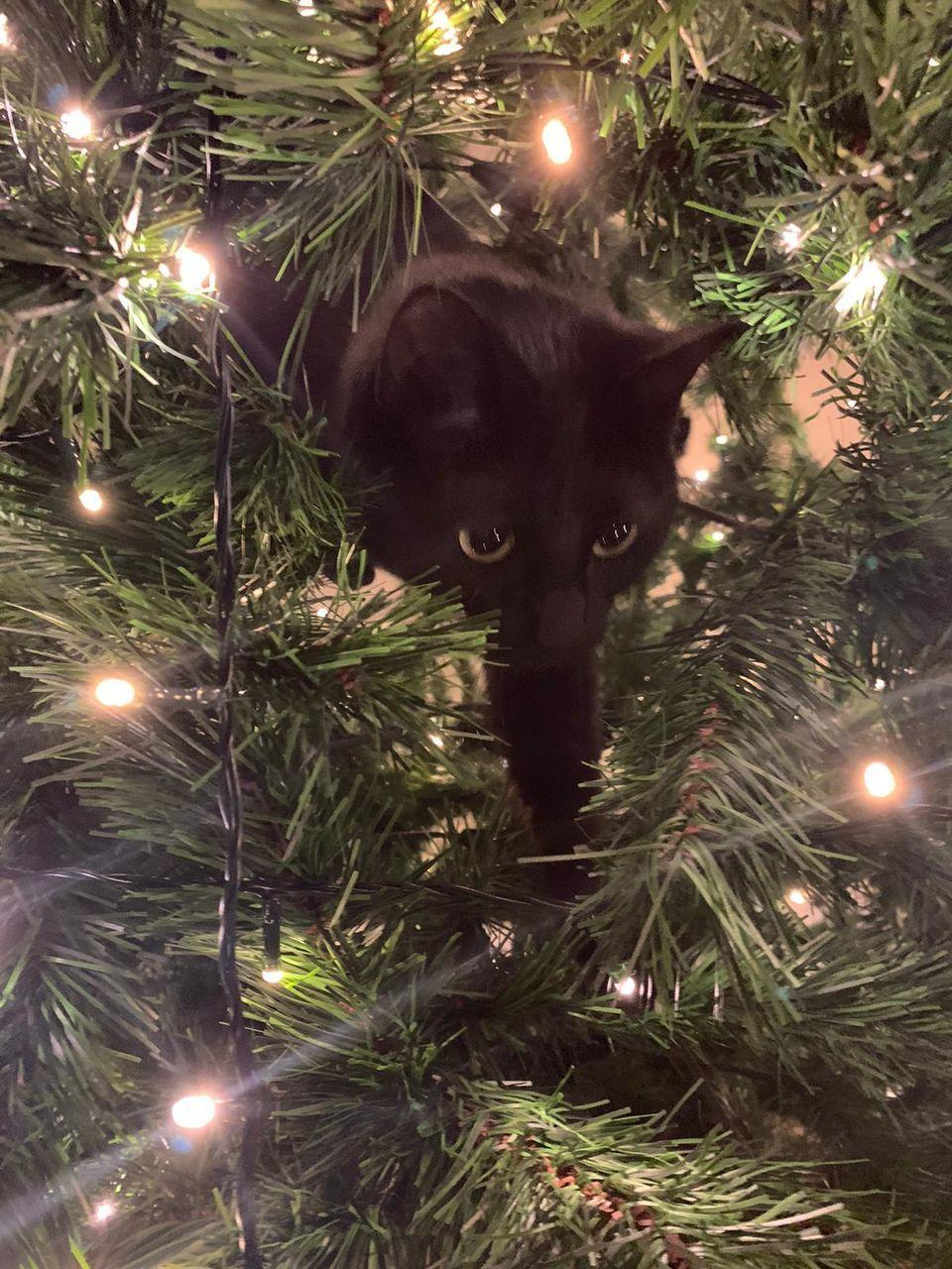 CAT ON ILLUMINATED CHRISTMAS LIGHTS