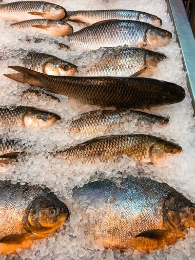 High angle view of fish on ice for sale at market