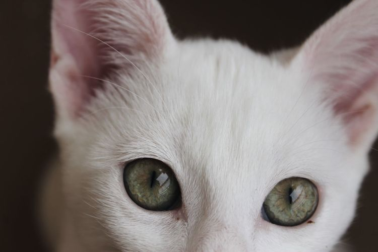 Chino Green Color Animal Animal Body Part Animal Eye Animal Head  Animal Nose Animal Themes Black Background Canon Canon1100d Canonphotography Cat Close-up Domestic Domestic Animals Domestic Cat Eye Feline Looking At Camera Mammal One Animal Pets Photography Whisker White Color