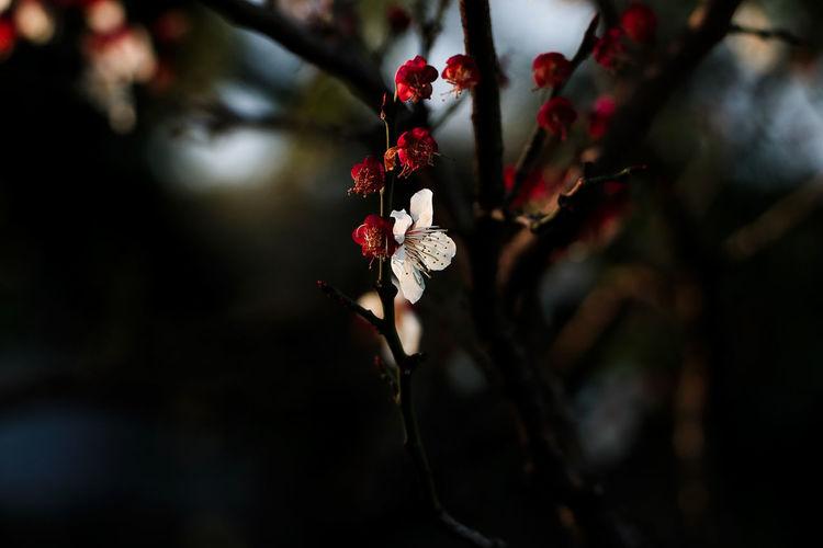 初春的冬意winter in