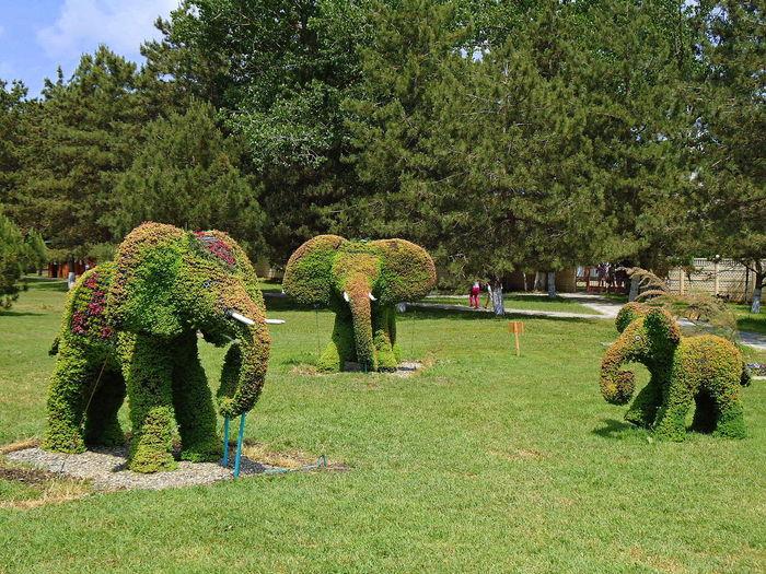 Decorative Bush Decorative Bushes Decorative Lawn Elephant Elephants Family Flowers Gardening Green Lawn Plant Sculpture Plant Sculptures Plants Russia Summer Topiary Topiary Art