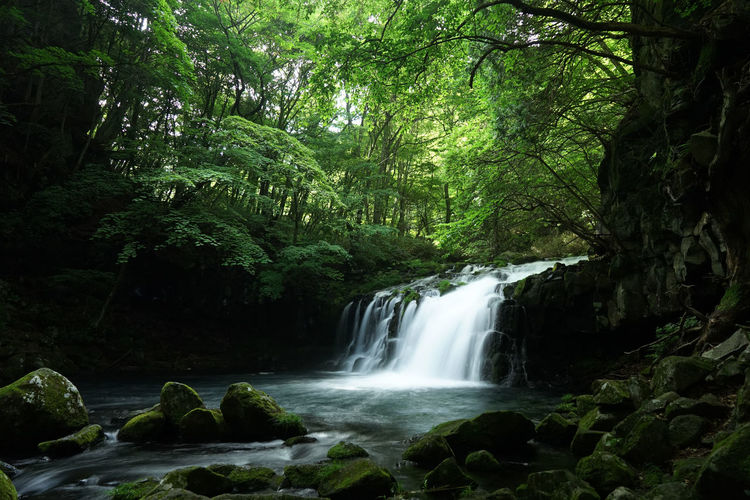 at OTAKI Waterfall Beauty In Nature Blurred Motion Environment Flowing Flowing Water Forest Green Color Growth Hidden Gems  Idyllic Lush Foliage Motion Nature Non-urban Scene Outdoors Plant Rock Rock - Object Scenics Showcase July Tranquil Scene Tranquility Tree Water Waterfall