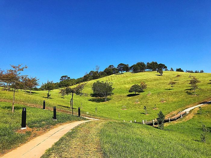 Mountain way with green grass and trees. Under the sky in the summer. Beautiful Sky Beautiful Place Sky Plant Growth Blue Green Color Nature No People Landscape Scenics - Nature Outdoors Environment Beauty In Nature Tranquility Copy Space Clear Sky Day Field Tranquil Scene Land Tree
