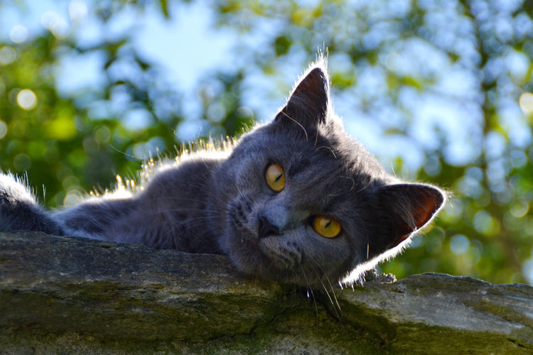 Close-up portrait of cat by tree