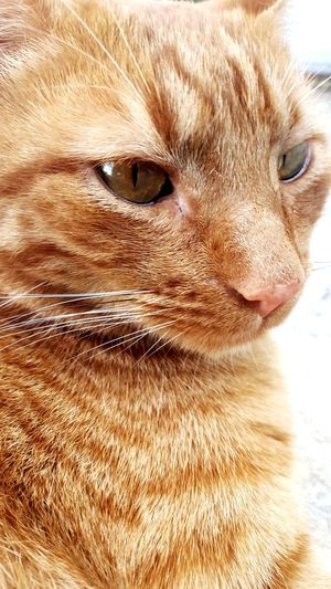 Pets Domestic Cat Domestic Animals One Animal Animal Themes Mammal Feline Whisker Portrait No People Close-up Indoors  Day Cat