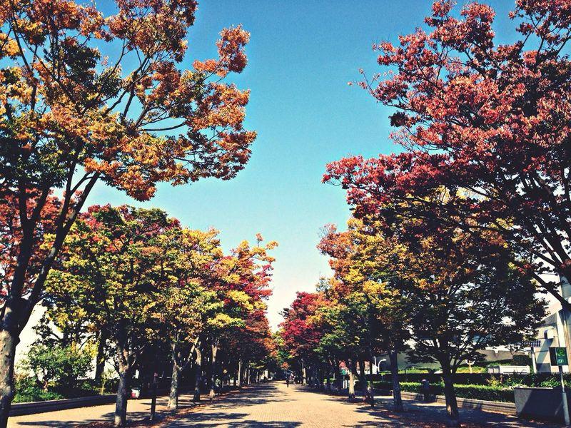 代々木公園、秋来たー! Autumn Nature_collection Tokyo Beautiful