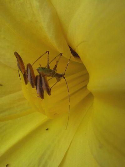 Bugs Life Bugs