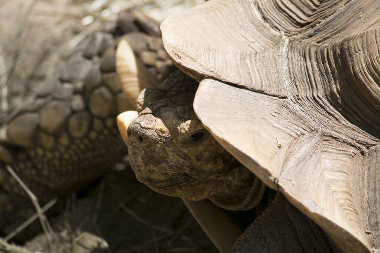 High Angle View Of Tortoise
