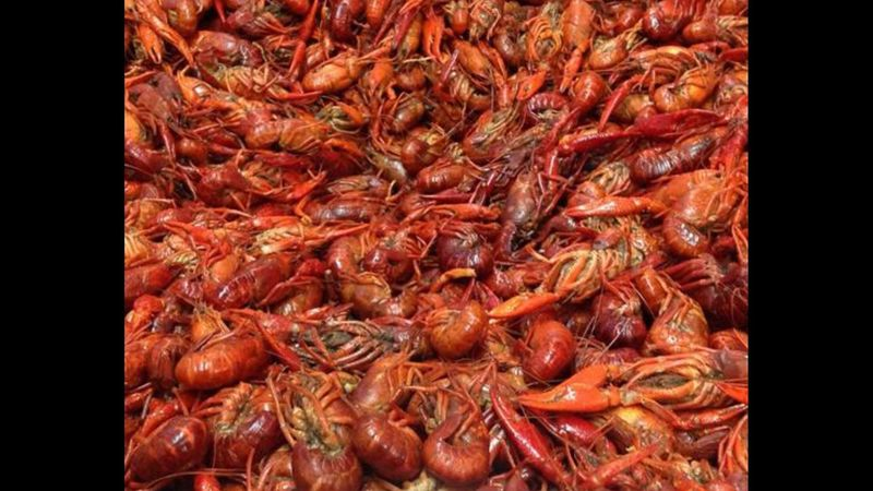 Crawfish SHELLFISH  food Mudbug Louisiana Spicy Food yummy