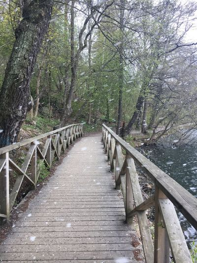 Snowing path Tree Railing Forest Tranquility Nature Footbridge Day Outdoors Bridge - Man Made Structure Tranquil Scene Beauty In Nature No People The Way Forward Water Growth Scenics Branch Sky Snow Bad Weather Running Unexpected Weather Change Snow In May Snow Run