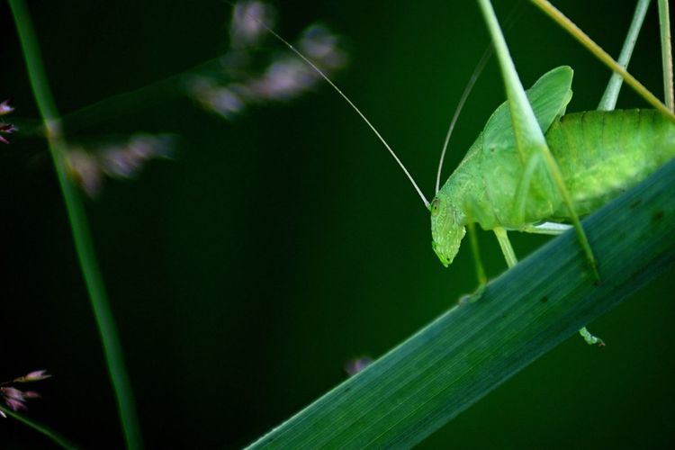 Insect Green