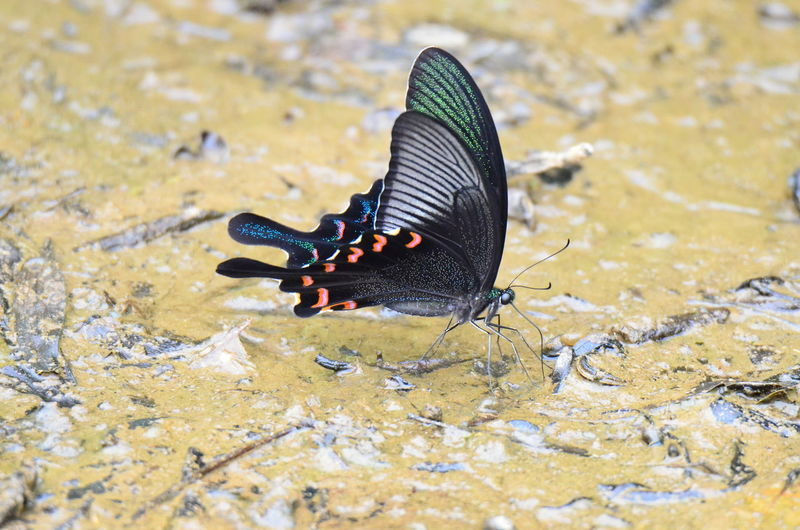 High angle view of butterfly in sea