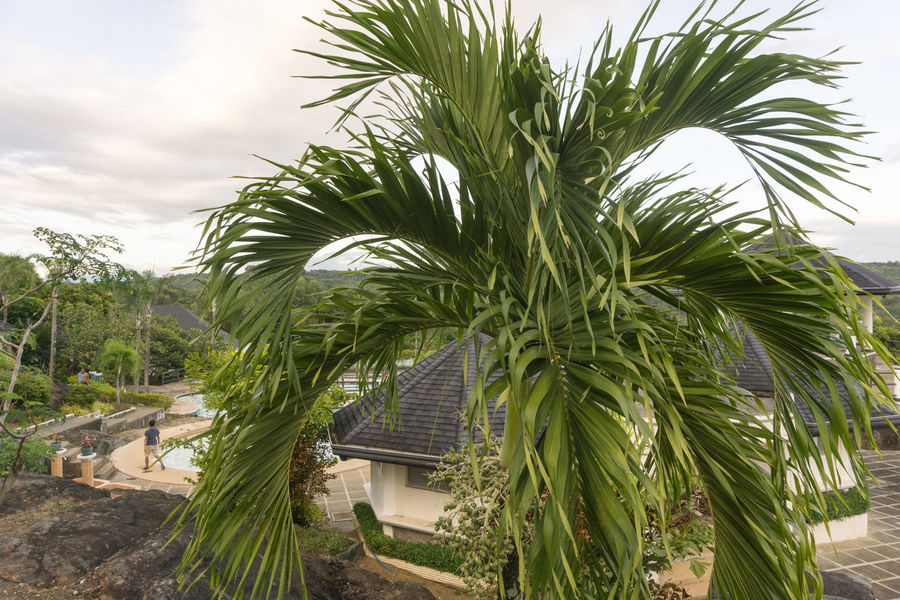 Palm trees in the Philippines 2017 Beauty In Nature Green Color Outdoors Outside Photography Overcast Skies Overcast Sky Palm Trees ❤❤ Pathways Philippines Tropical Plants