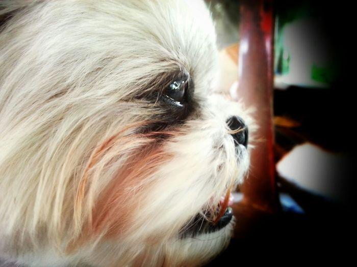 My Dog ...Name