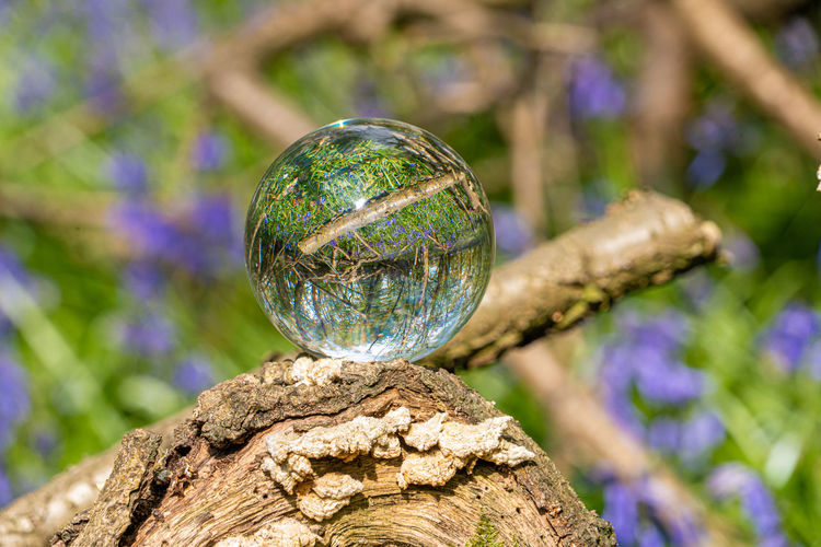 Close-up of crystal ball on tree