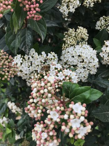 Growth Flower Leaf Plant Nature Green Color Beauty In Nature White Color Fragility Day Freshness No People Outdoors Blooming Flower Head Close-up