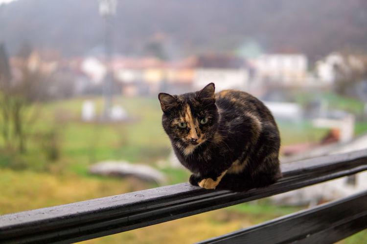 Portrait of black cat sitting on railing