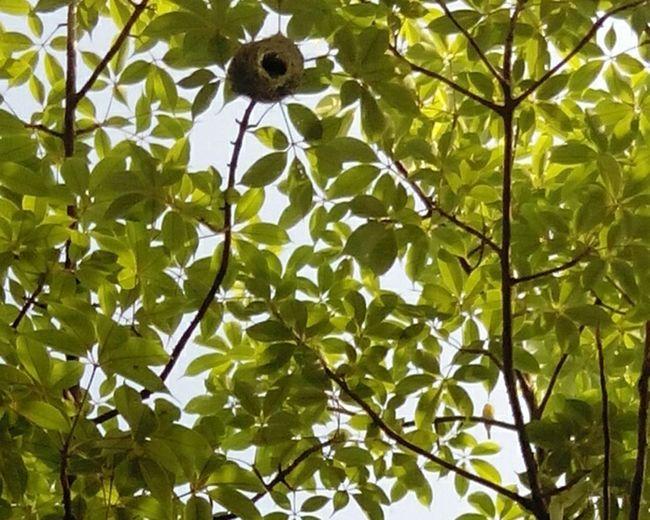 Godrej Mangroves Weaverbird Weaverbird Nest Watch The Birdie Spot The Birdie Leaf 🍂 Nature On Your Doorstep