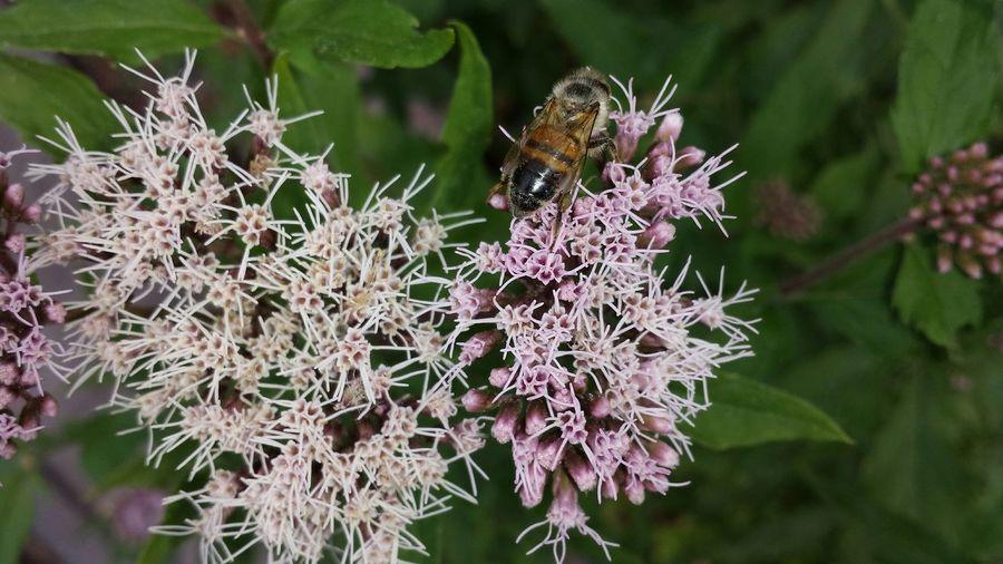 Garten Garden Blüte Insekt Biene Bee 🐝 Nature's Diversities Macro Nature Macro Photography Macro