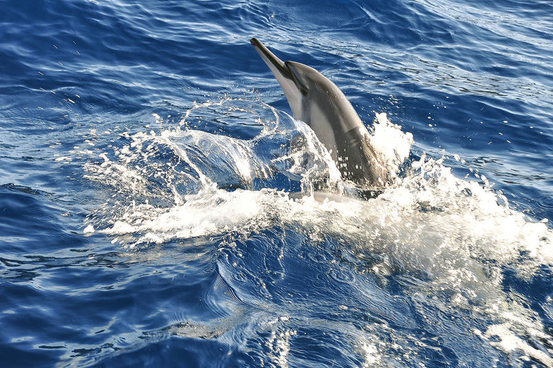 Scenic view of dolphin jumping from water
