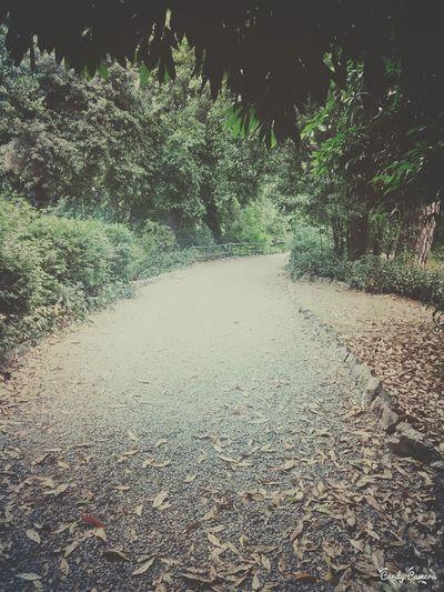 Forest Parco Perdersi Scappare Escape