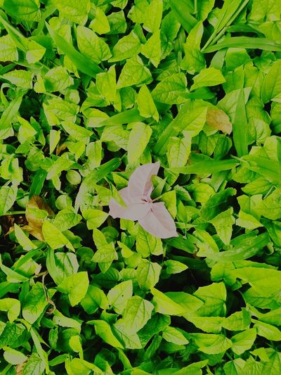 Perspectives On Nature Green Color Nature No People Plant Plant Found Nature Beauty In Nature Green Color Flower Head Flower Flowers