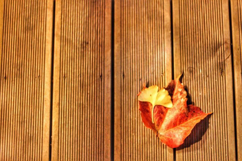 Autumn rule of